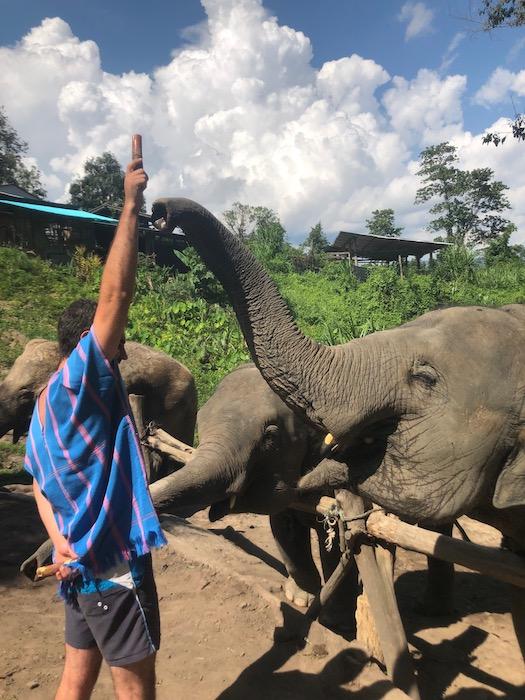 Karmienie słoni