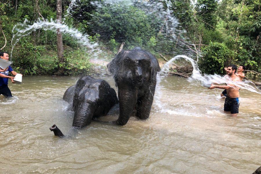 Kąpiel w rzece ze słoniami