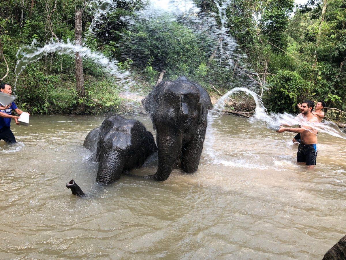Sanktuarium słoni w Chiang Mai – jak wybrać to najlepsze?