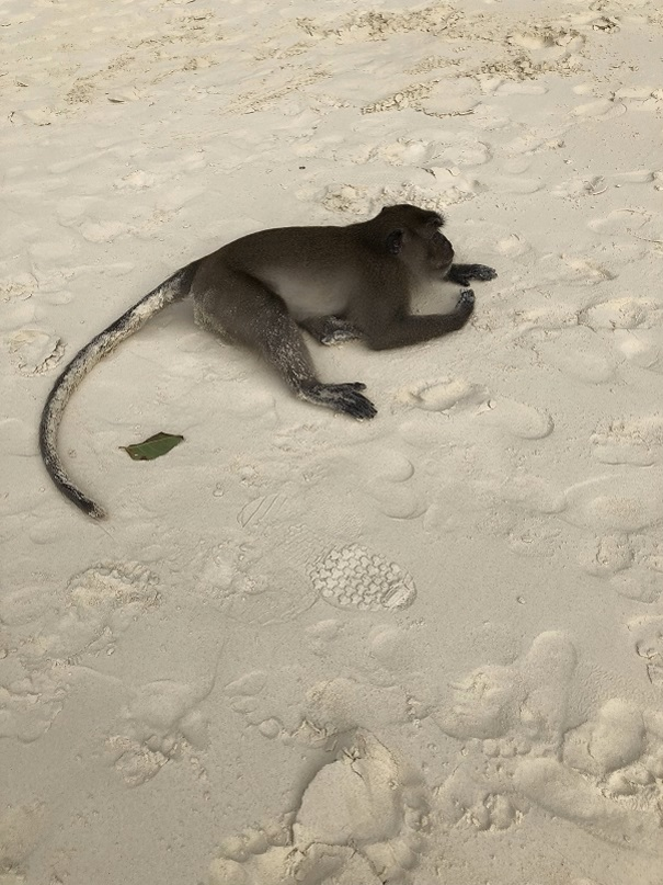 Mapła na Monkey Beach