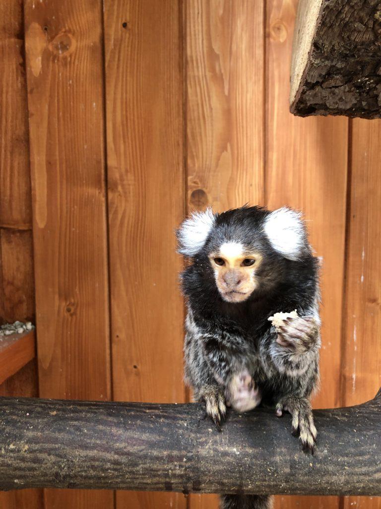 Zwierzęta w Zoo w Żywcu